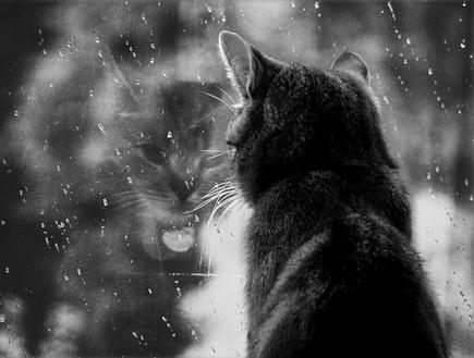 грусть дождь за окном картинки