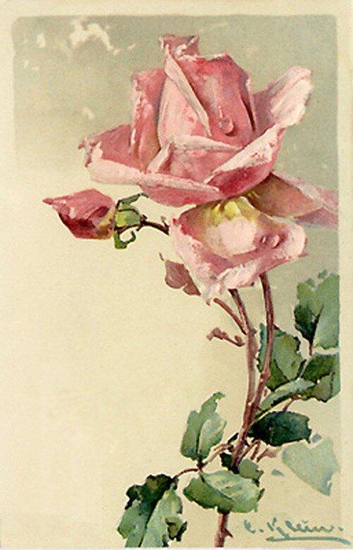 К. Кляйн. 53. Роза.