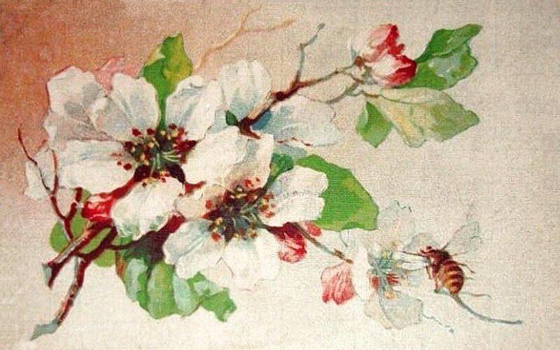 К. Кляйн. 228. Цветущая яблоня и пчела.