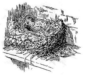 Гнездо городской ласточки