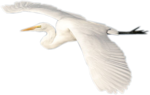 GreatEgret EGS 4.5.png