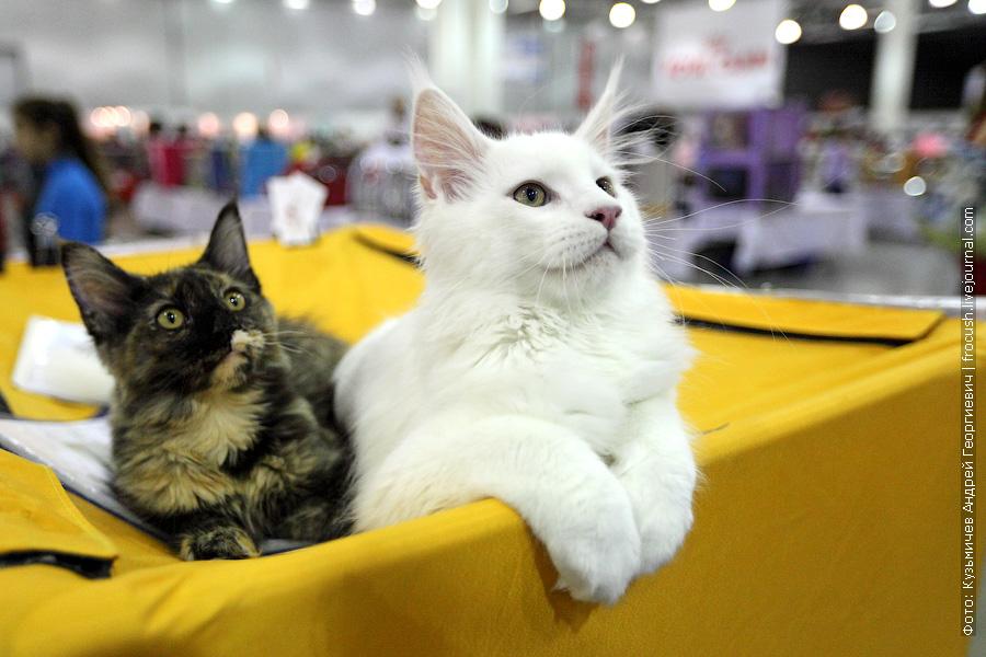 фотографии выставка кошек