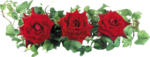 roza2 (66).png