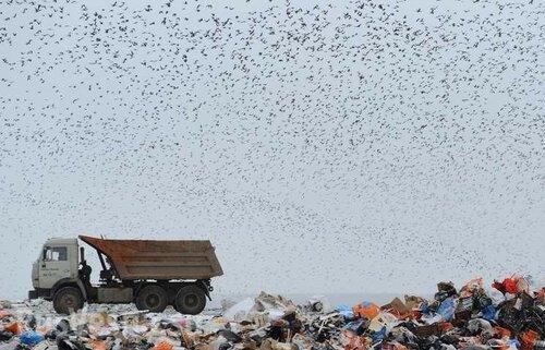При производстве одного мобильного телефона образуется 86 кг отходов