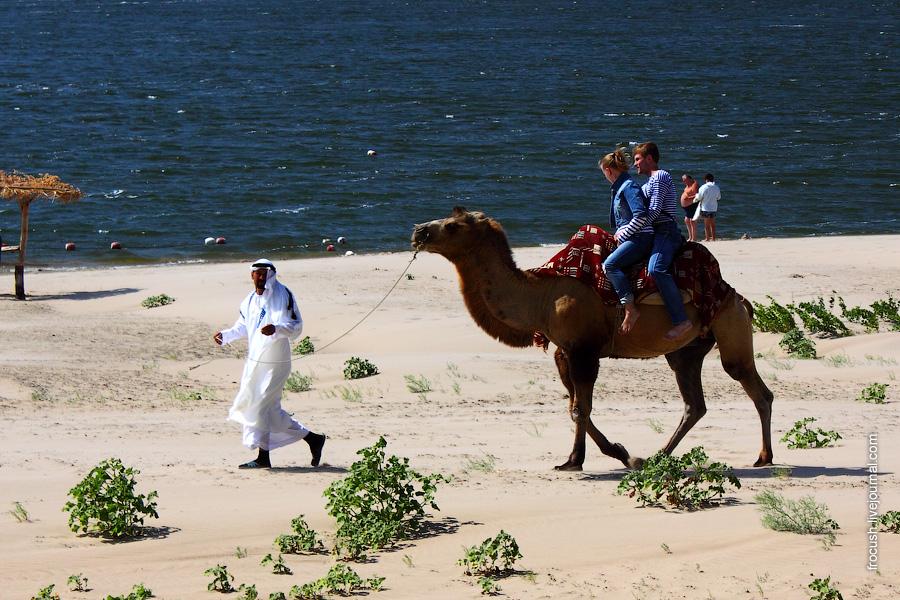 туристы катаются на верблюде
