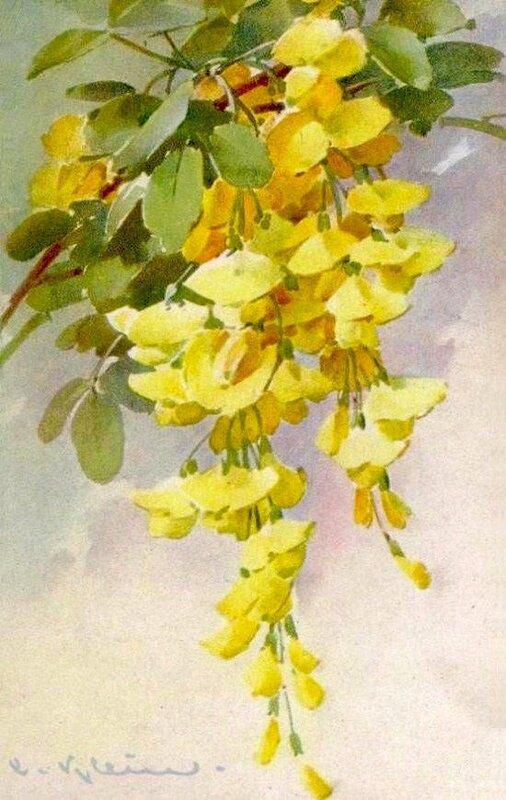 К. Кляйн. 97. Цветы.