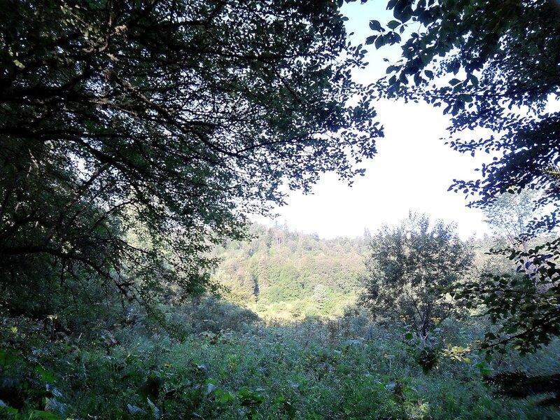 Лес на речных берегах...