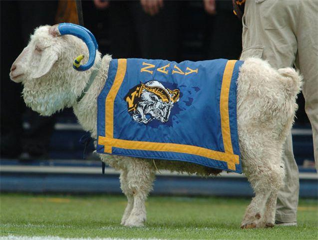 Живые талисманы в студенческом спорте / NCAA Top Real Animal Mascots - Bill XXXIII the Goat / Navy