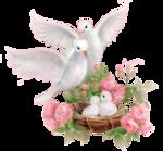 PP~Doves~JLK.png