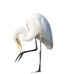 LU_GraphicDream_Stork_01.png