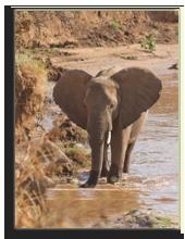 Кения. Масаи Мара. Фото Atakhar - Depositphotos