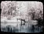 пейзажи2