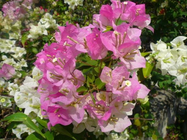 Цветы Таиланда 0 141ae6 32ff9010 orig