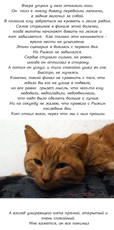 История одного доброго кота