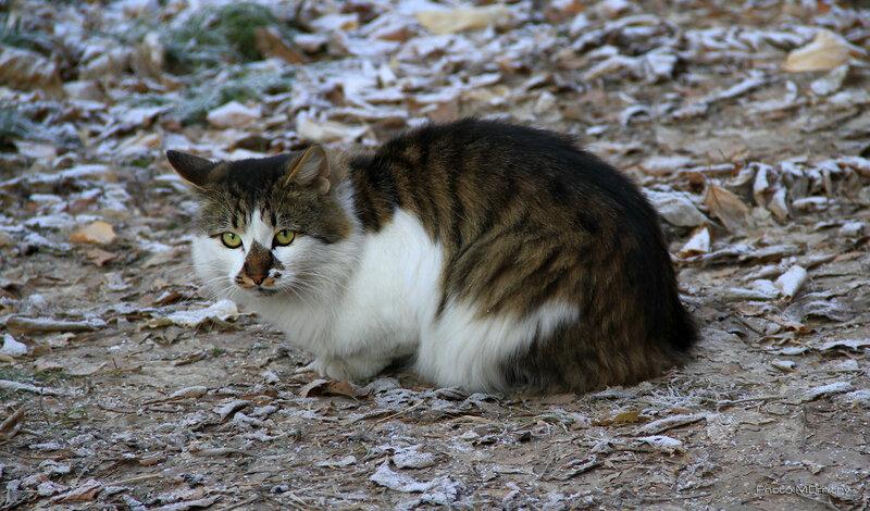 Кошки & Коты