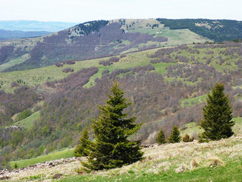 пейзаж в мае в парке голия (голиjа)