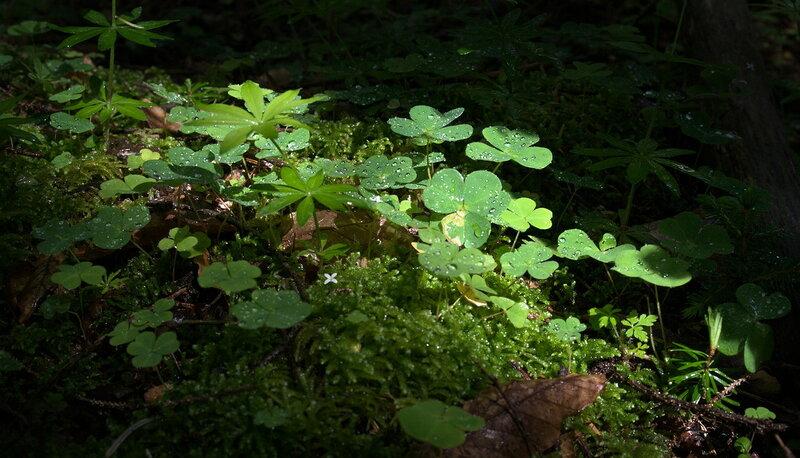 Капли на листве