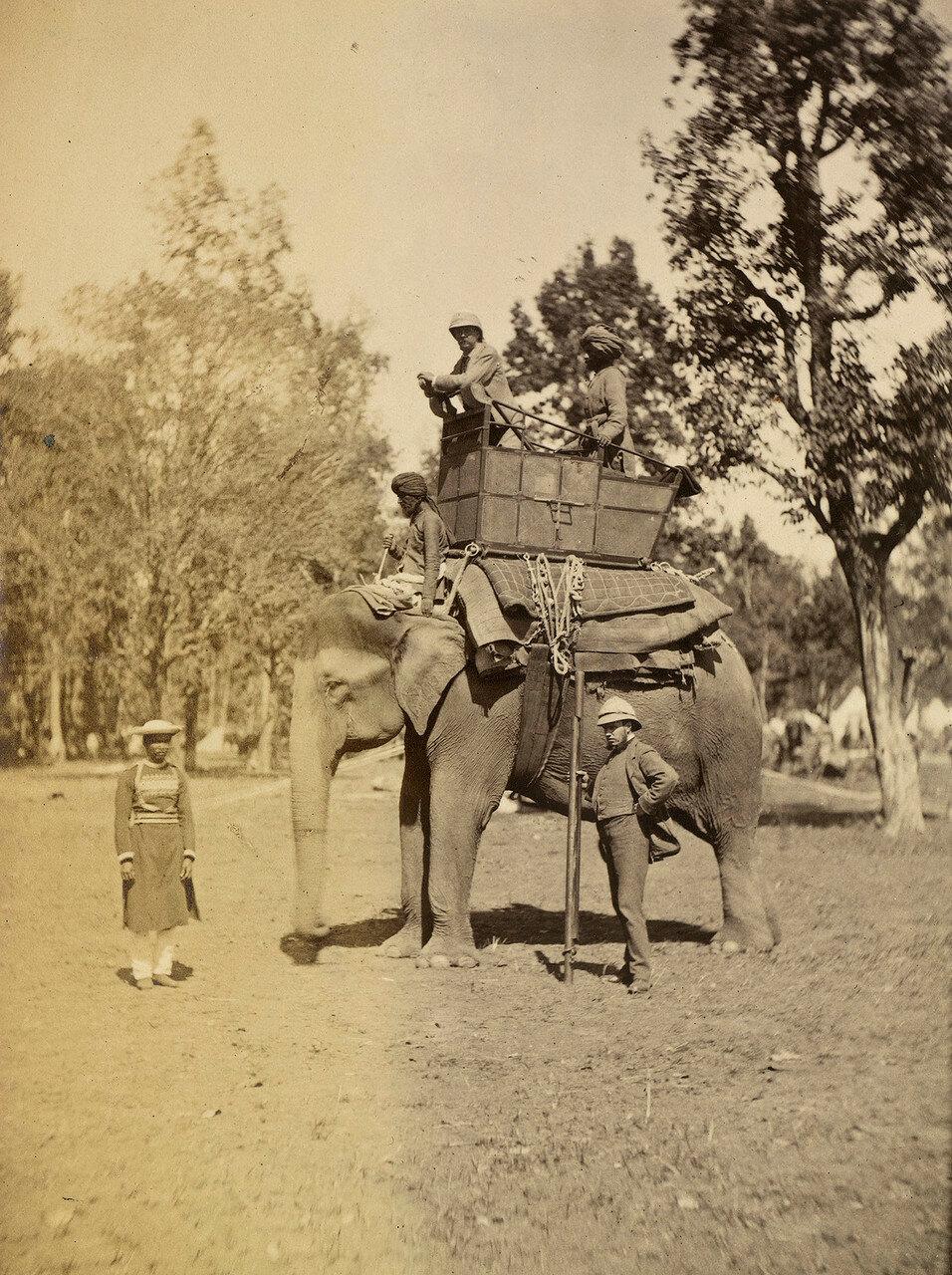125. Чарльз Роберт Винн-Карингтон, 3-й барон Каррингтон 1-й маркиз Линкольншира (1843-1928) на слоне