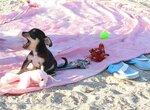 Бонифаций на пляже