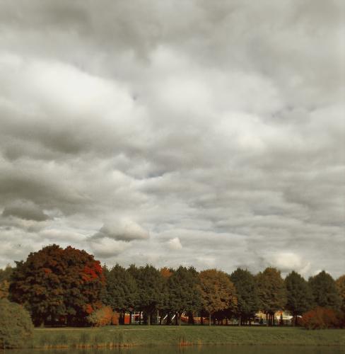 деревья золотой осени