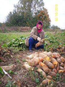 Уборка урожая - дело приятное!