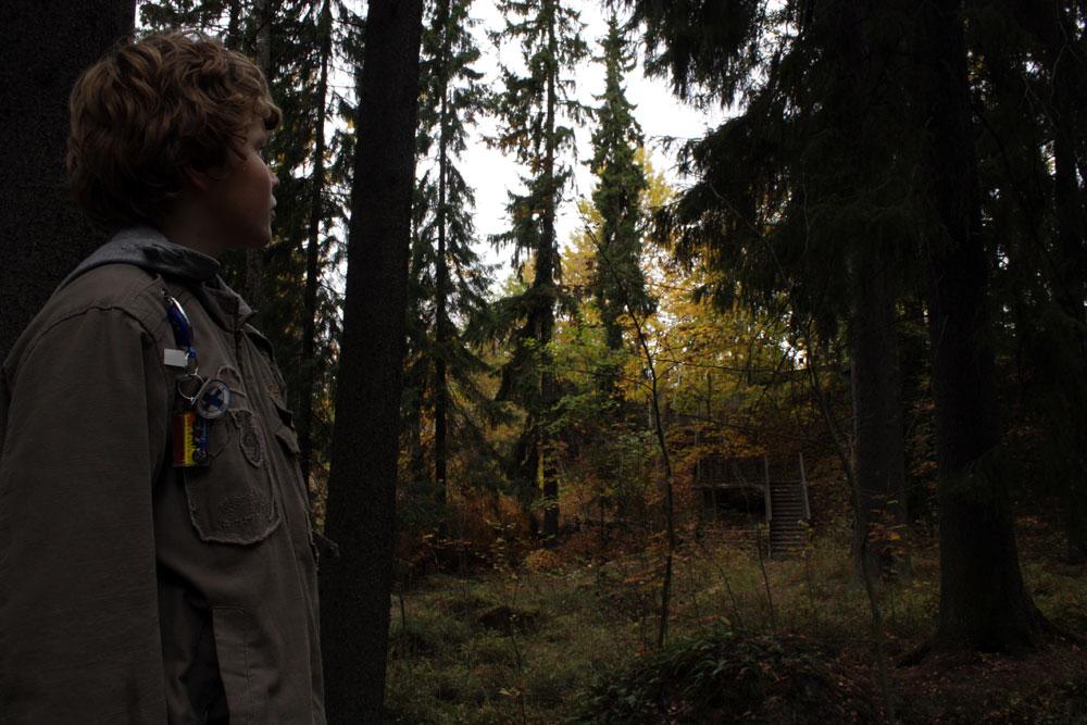 темный лес в Иматре