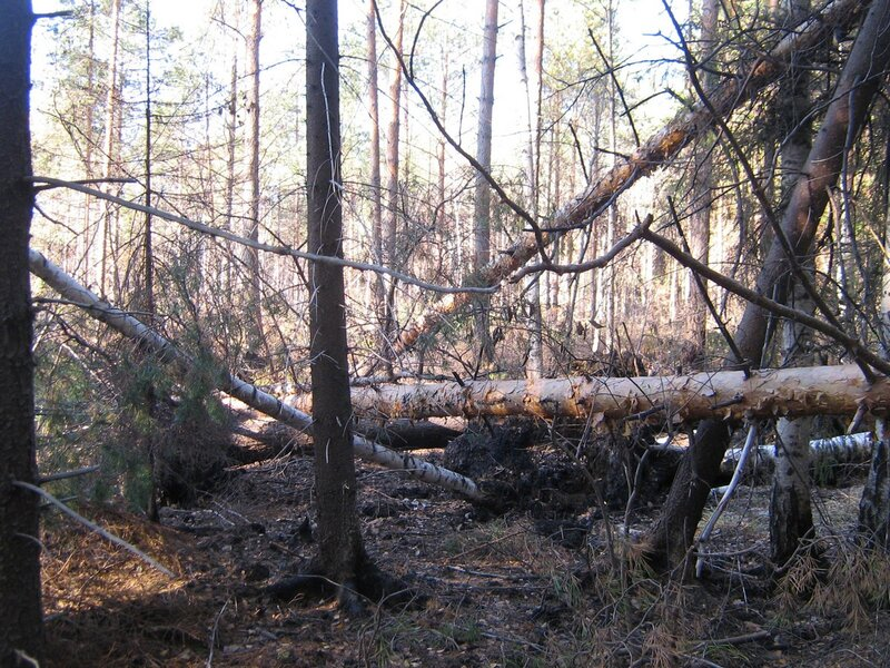 лес после пожара - 2