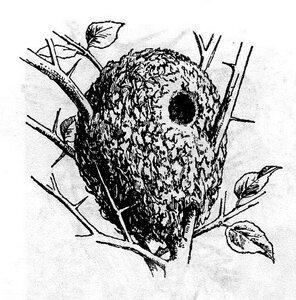 гнездо длиннохвостой синицы