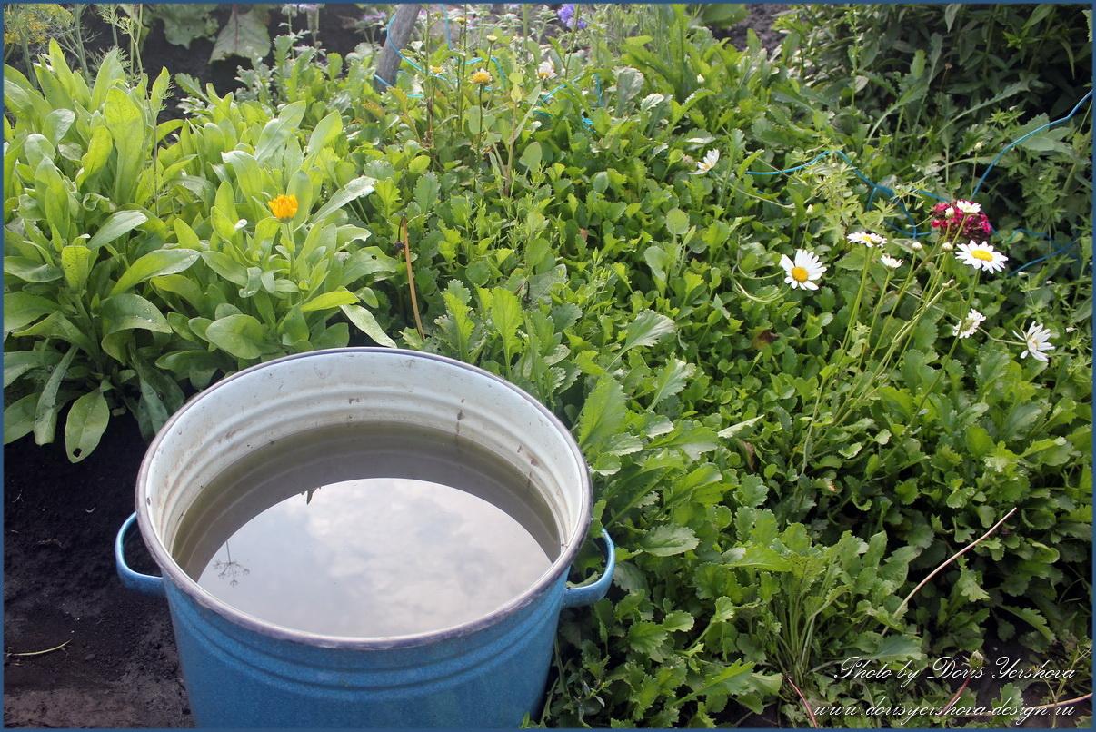 огород, кастрюля с водой, цветы, зелень, ромашки, календула, фото Дорис Ершовой