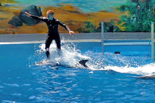 Шоу дельфинов в Сочи