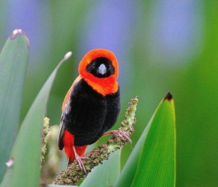 Ночная птица. Фотографии, которые не соответствуют заголовку