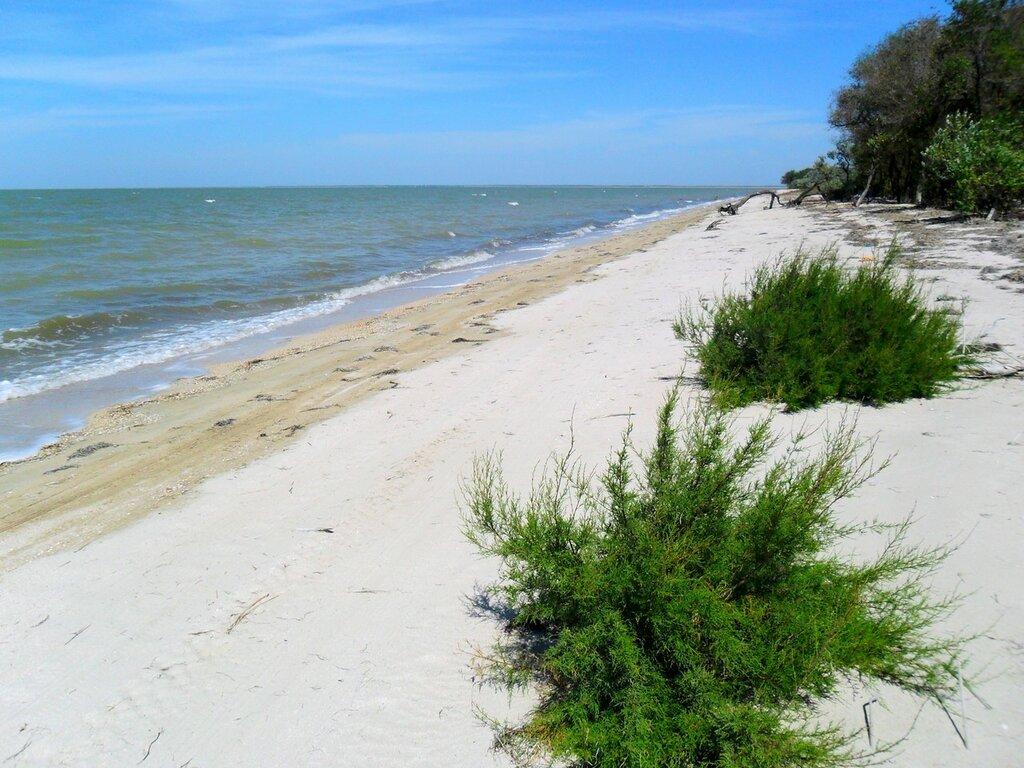 Зеленый Куст на песке ... SAM_2131.JPG