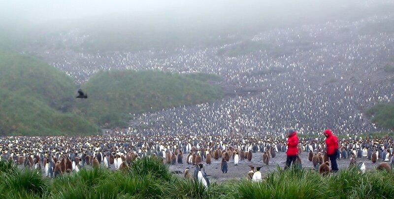 люди и пингвины