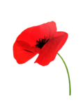 coquelicots1_emma_210510.png