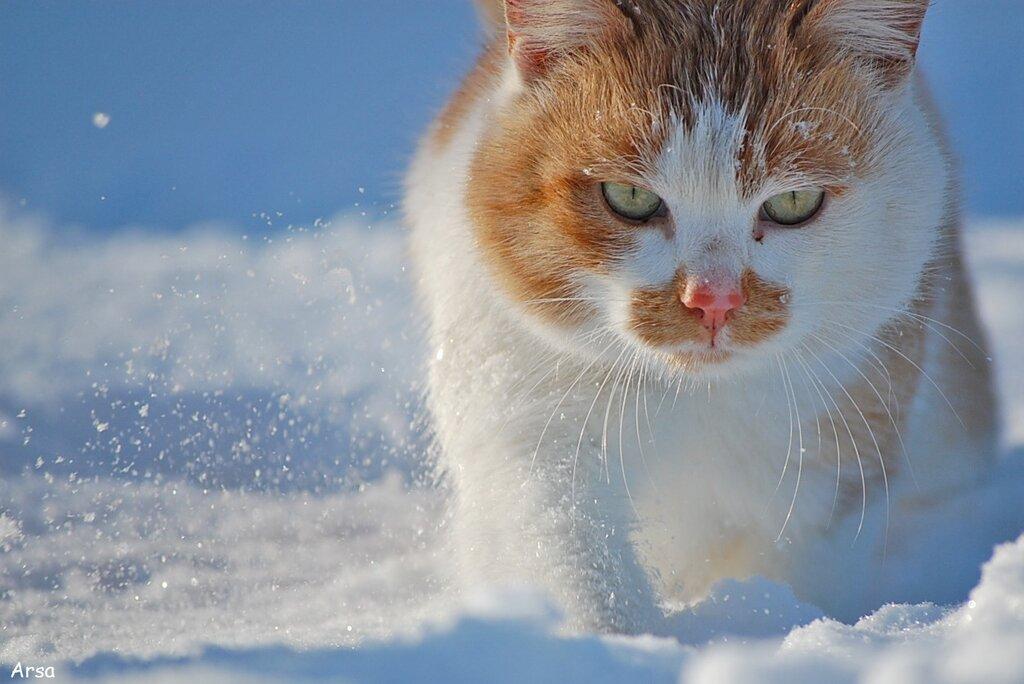 """СнегоКот """"Рыжий"""":)"""