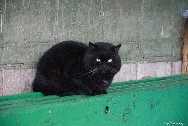 черный кот крупно