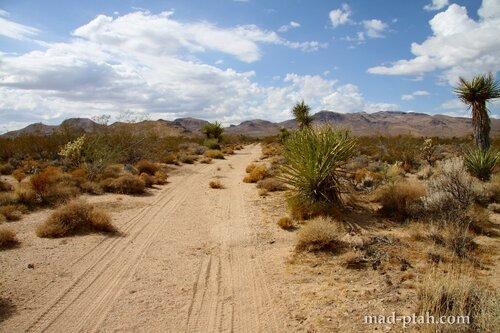флагстафф, сша, аризона, гранд каньон, пустыня Мохаве, кактусы, автопутешествие, путешествие