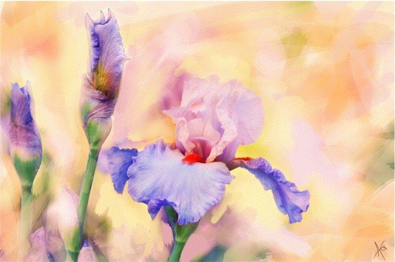 Солнца луч цветы в бутонах будит...Фотохудожник Alberto Guillen