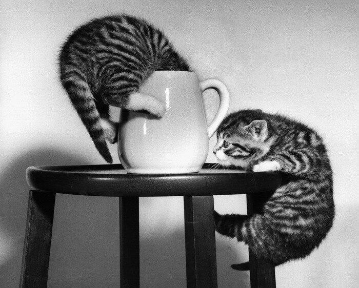 из жизни кошачьей