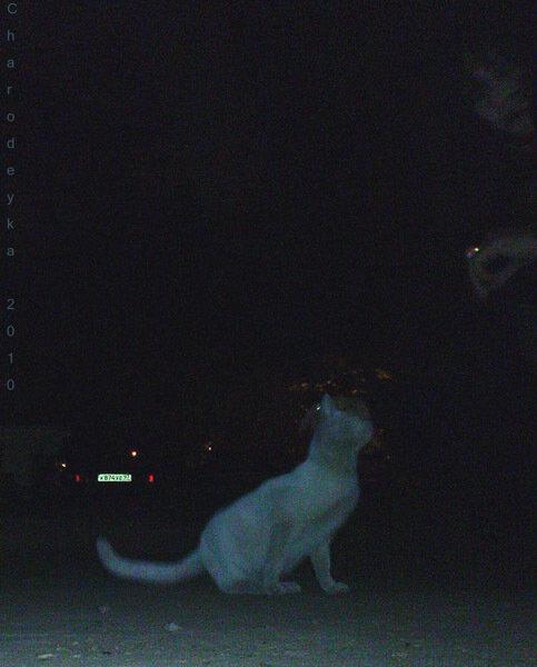 987.12 С кошкой. 16 мая 2010 г.
