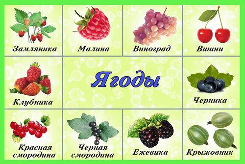 картинки для детей ягоды и грибы