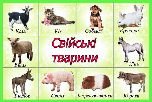 Свiйськi тварини домашні тварини