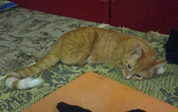 Ослабли задние лапы у кота