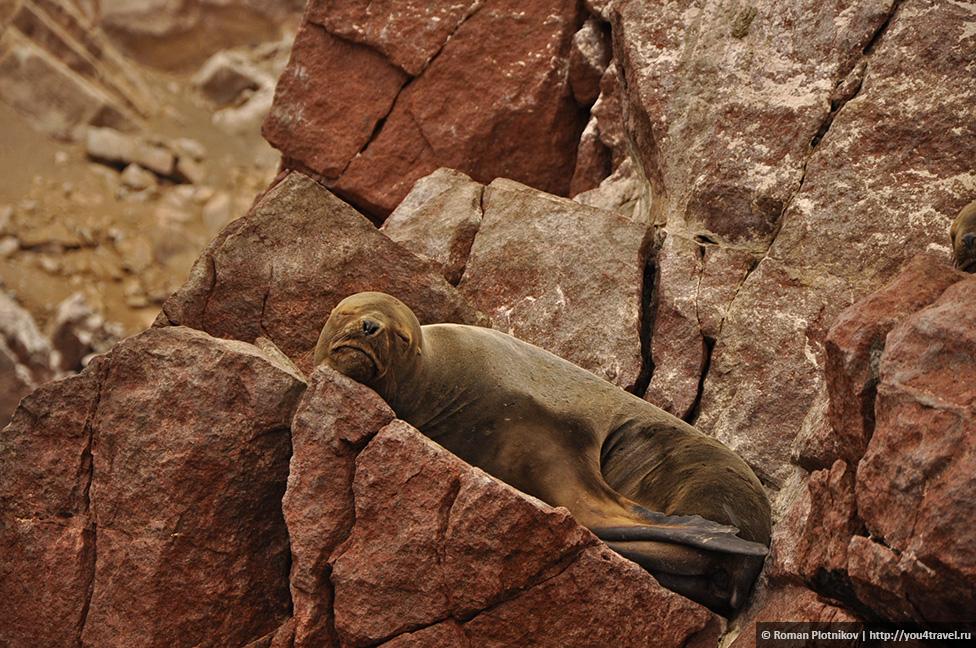 0 161746 b2745ddf orig Национальный парк Паракас и острова Бальестас в Перу