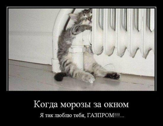 картинка я тебя люблю смешная