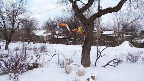морозоустойчивый попугай