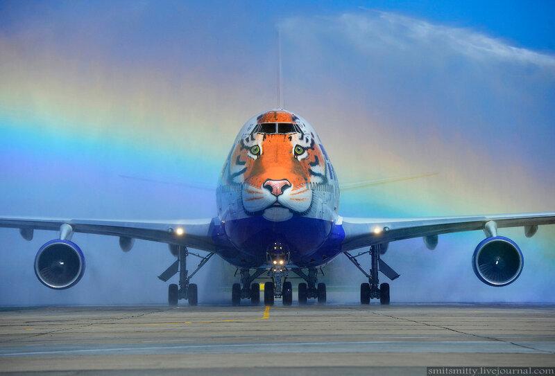 «Полосатый рейс» приземлился в аэропорту Владивостока