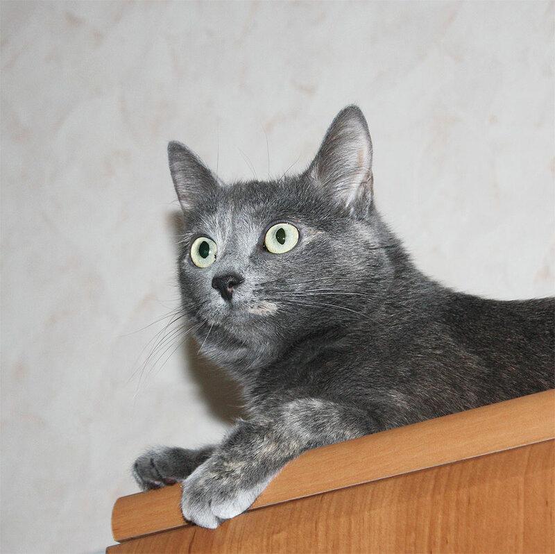 Тинки, 4 февраля 2012