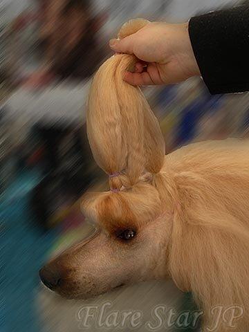 【ギネスブックでの記録へ】スターシャの毛伸び