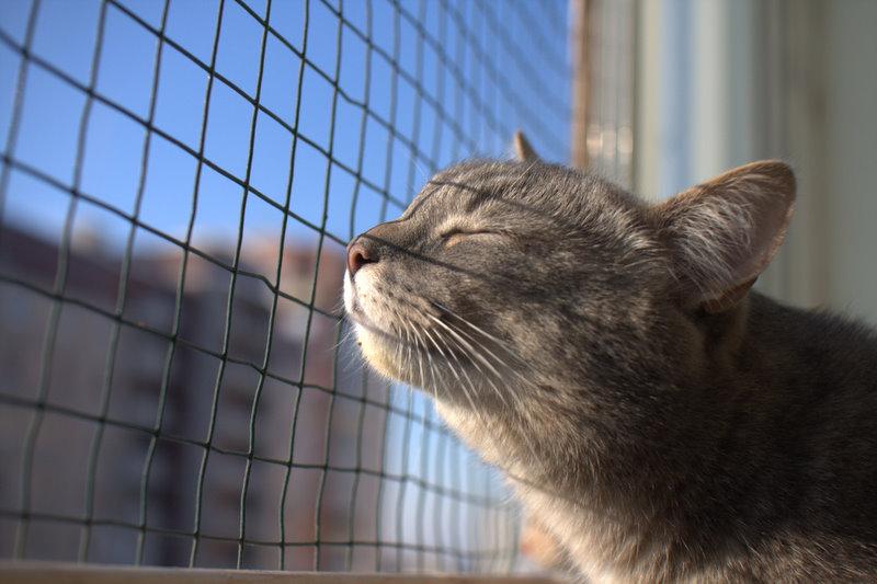 Кот на балкое